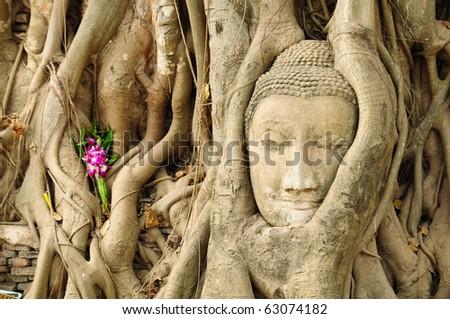 the head of the sandstone buddha, Ayutthaya,Thailand - stock photo
