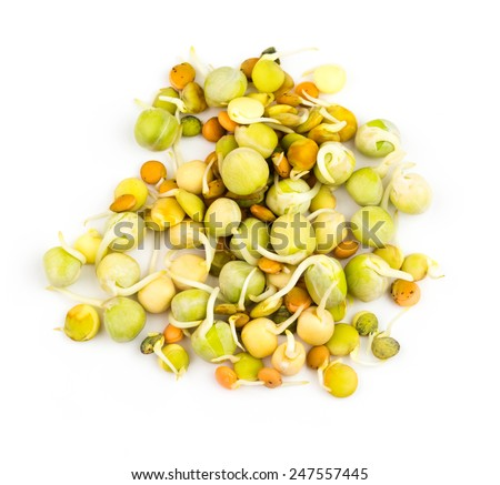 The healthy and wellness diet. Fresh sprouts isolated on white background - stock photo