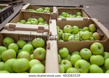 The 	heavy yield of apples