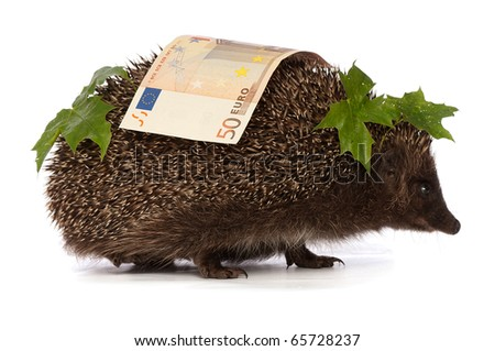 The hedgehog in motion hastens home from the bank carrying percent fifty euro profit - stock photo
