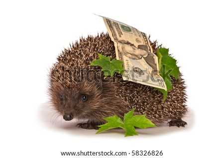 The hedgehog in motion hastens home from the bank carrying percent hundred dollars profit - stock photo