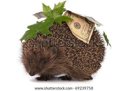 The hedgehog in motion hastens home from the bank carrying percent twenty dollars profit - stock photo