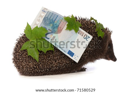 The hedgehog in motion hastens home from the bank carrying percent twenty euro profit - stock photo