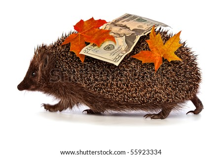 The hedgehog in motion hastens home from the bank carrying twenty percent dollar profit - stock photo