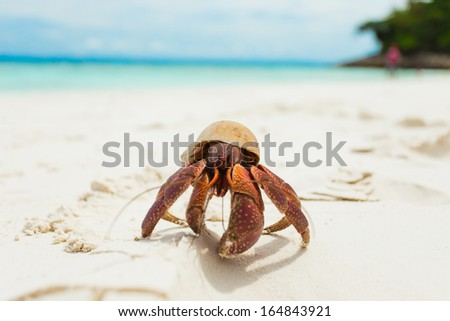 The Hermit Crab on the Beach  - stock photo