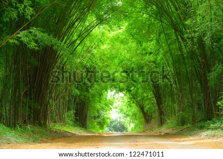 The high bamboo both side of the road bend to cover the clay road. - stock photo