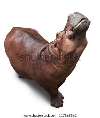 the hippopotamus lifted the head in top and widely opened a mouth - stock photo