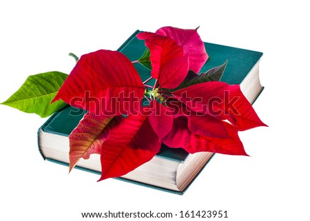 the holy bible with a poinsettia flower on it and isolated on white - stock photo