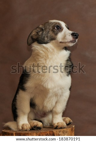The homeless not purebred dog thrown by people - stock photo