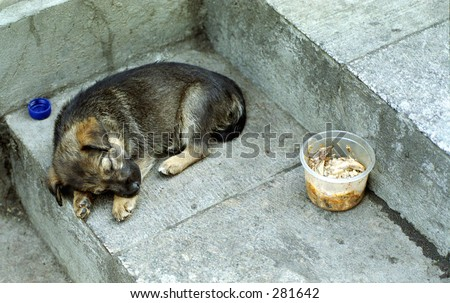 The homeless puppy in the street the big city - stock photo