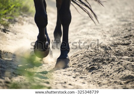 The hooves of walking horse in sand dust. Shallow DOF. - stock photo