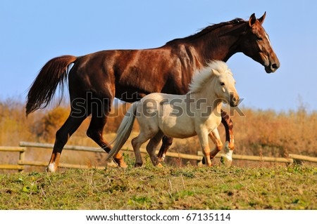The horse and shetland pony in the paddock - stock photo