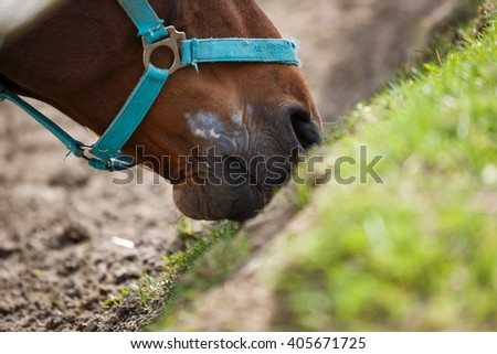 The horse feeding the grass at spring time - stock photo