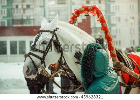 the horse in harness in the winter
