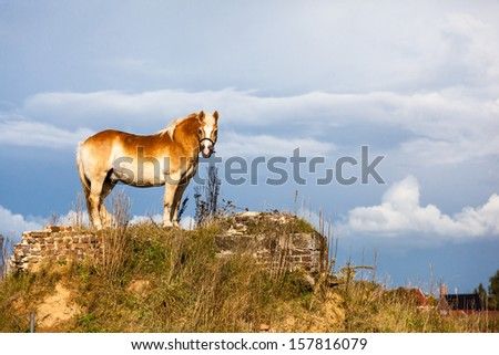 The horse is a domesticated ungulate from the order of ungulates, a current of about ten species of the family Equidae. The domesticated horse is kept mainly as saddle or draft animals.
