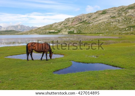 The horse is grazed on a green meadow near the river - stock photo