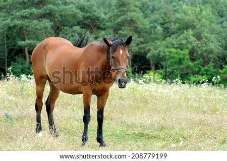 The horse is grazing in the pasture. - stock photo