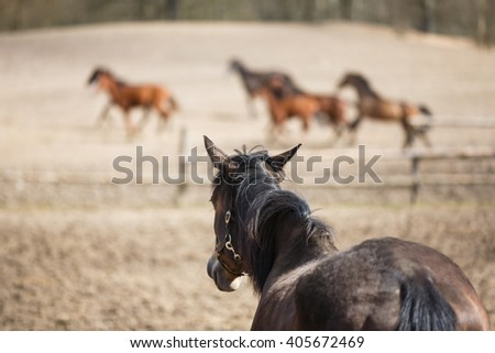 The horse is looking at the horses running around - stock photo