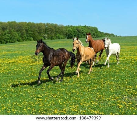 The horse runs gallop on the field - stock photo
