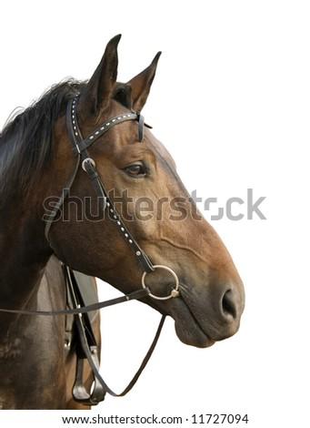 The horse's head - stock photo