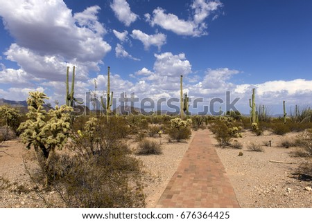 The huge cactus - Carnegie giant (Carnegiea gigantea). Organ Pipe Cactus National Monument, Arizona, US