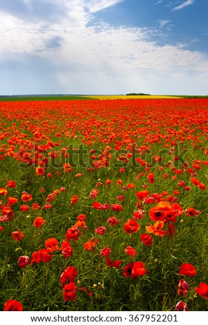 The huge field of red poppies flowers. Sun and clouds. View of a lot of poppies