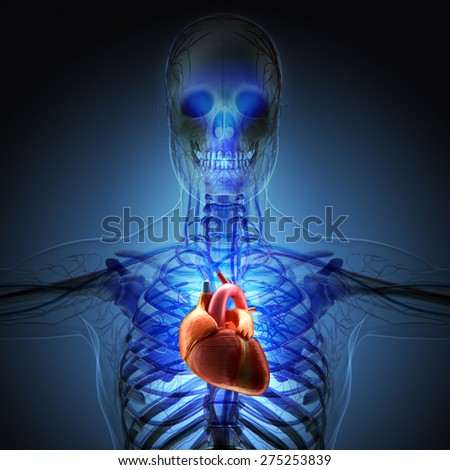 The human body by X-rays on blue background. High resolution.  - stock photo