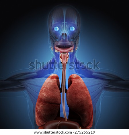 The human body by X-rays on blue background. High resolution.
