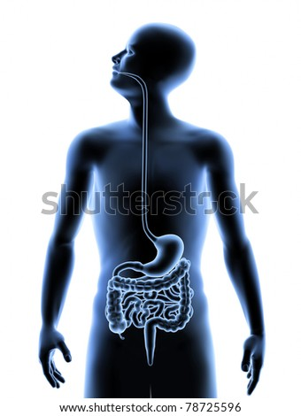 The Human Body - Digestive System - stock photo