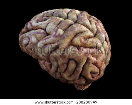 The Human Brain. Physical 3D Render. - stock photo