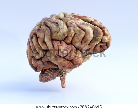 The Human Brain. Right View. Physical 3D Render. - stock photo