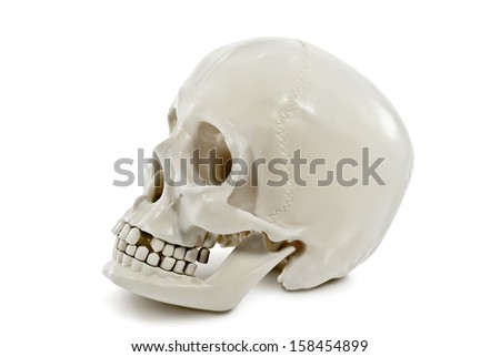 The human skull isolated on white background. - stock photo