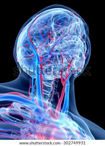the human vascular system -  - stock photo