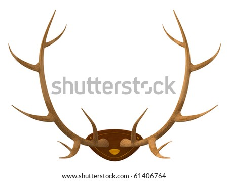 The hunting trophy a stuffed animal - horns of a deer isolated