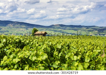 The hut in the middle of vineyards, Beaujolais, France - stock photo