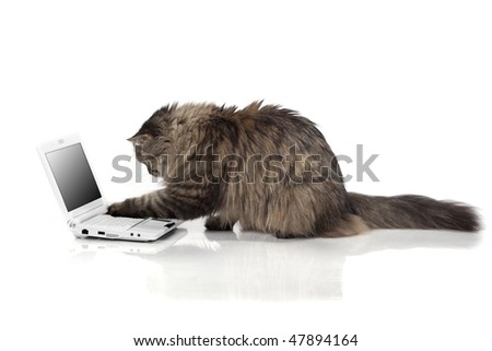 The image of a cat who works for laptop