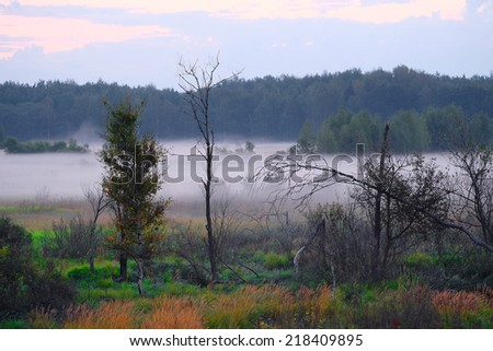 the image of a panorama of the morning mist on the lake in the woods - stock photo