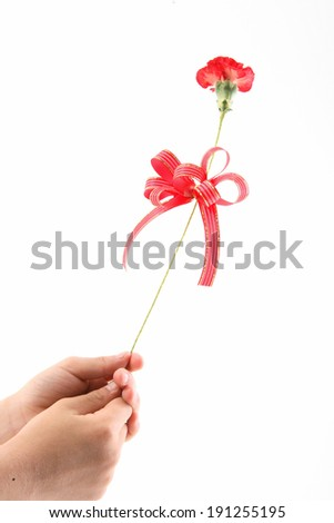 The image of carnation on parent's day in Korea, Asia