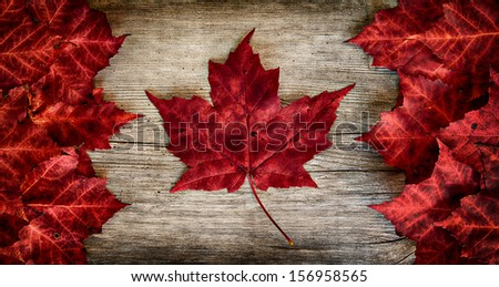 The image of the flag of Canada constructed entirely out of genuine maple leaves from species native to that country.  Laid out on top of weathered cedar.   - stock photo