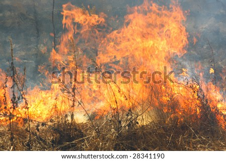 The image of the forest fire