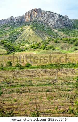 The image of the young spring grape fields in a mountain valley in the background of the Crimean mountain range. Plantation of grapes, rural picturesque natural landscape