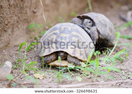 The image of two turtles crawling on the ground - stock photo