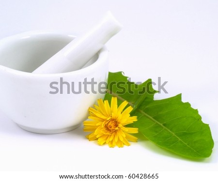 the image shows a dandelion blossom - stock photo
