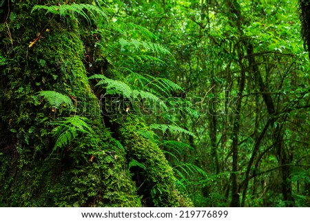 The integrity of the forest. Doi Inthanon National Park. Chiang Mai, Thailand - stock photo