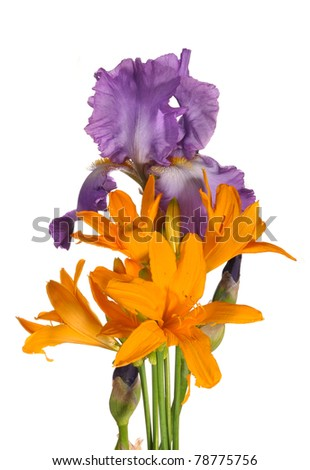The iris and day lily, stand - stock photo