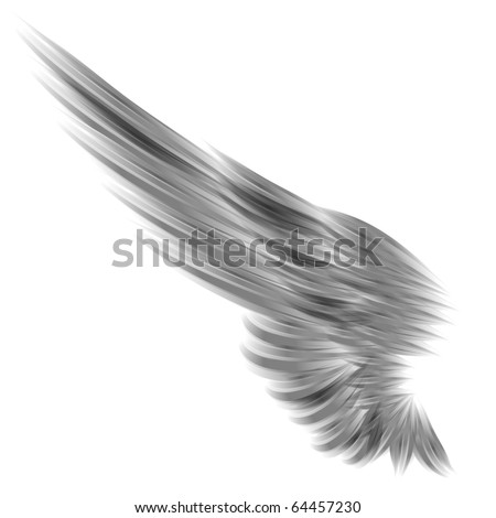 The isolated wing on white background - stock photo