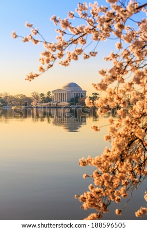 the Jefferson Memorial during the Cherry Blossom Festival. Washington, DC - stock photo