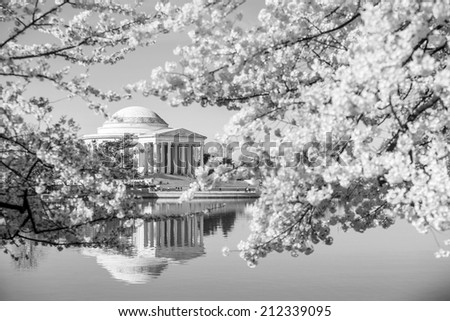 the Jefferson Memorial during the Cherry Blossom Festival. Washington, DC black and white - stock photo
