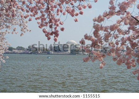 The Jefferson Memorial Framed by Cherry Blossom Trees - stock photo