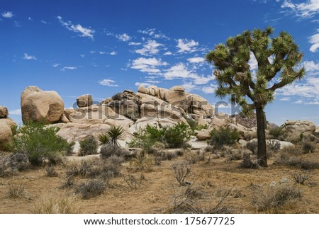 The Joshua tree and stone landscape near Palm Springs California. - stock photo
